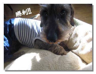 nawabari05087.jpg