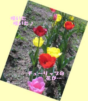 saita0421.jpg
