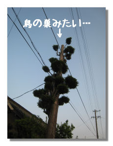 sanpo50004.jpg