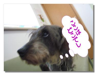 wakutin2_20080414063520.jpg