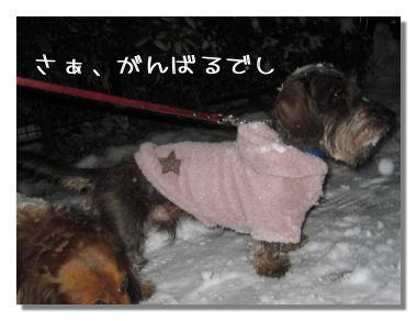 yukikonko2.jpg