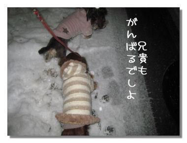 yukikonko3.jpg