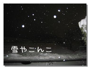 yukkikonko1.jpg