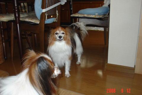 200912・素洗い後の2頭2