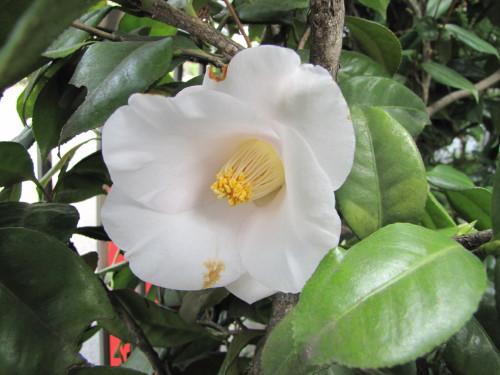 210412・庭の花02