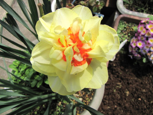 210412・庭の花05