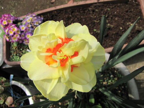 210412・庭の花06