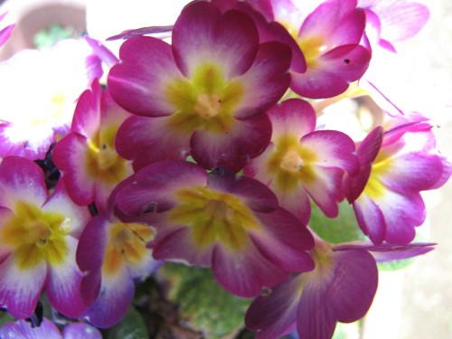 210412・庭の花07