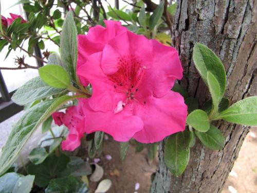 210412・庭の花10