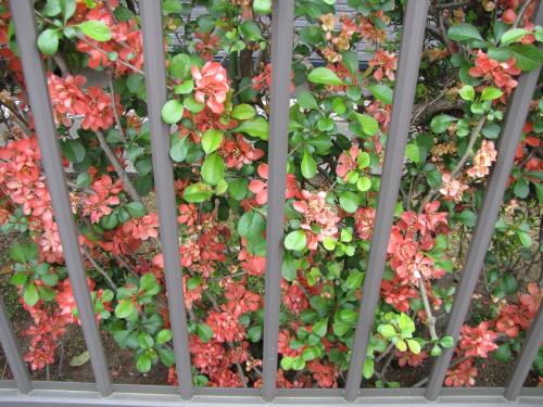 210412・庭の花11