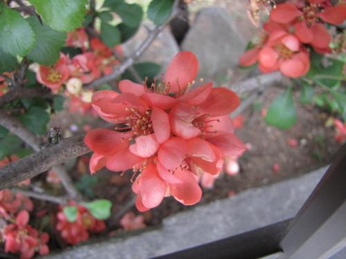 210412・庭の花12