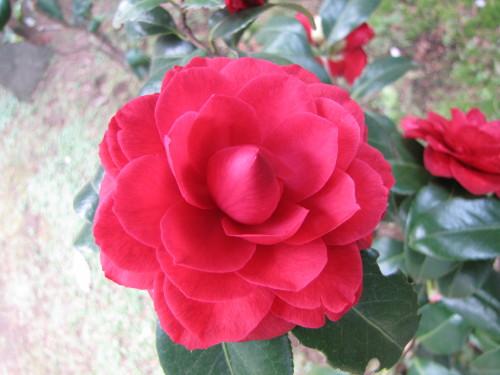 210412・庭の花03