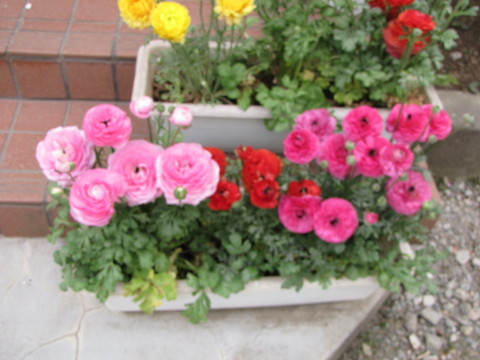210414・小学校の花07