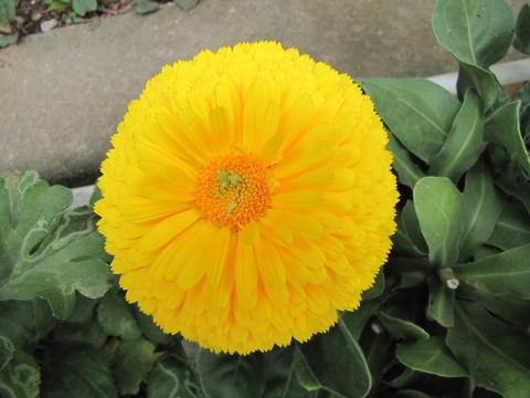 210414・小学校の花10