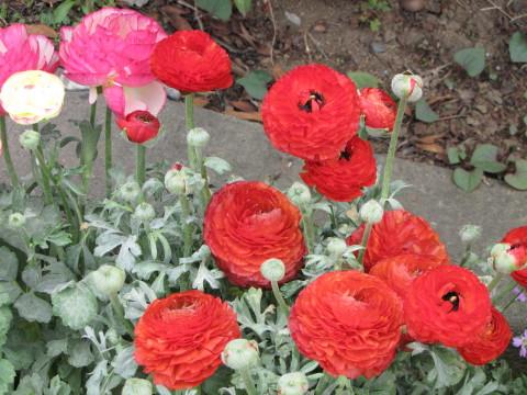210414・小学校の花11
