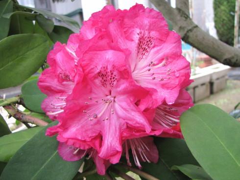 210417・庭の花1