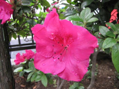 210417・庭の花2
