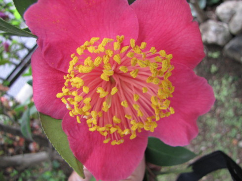 210417・庭の花4