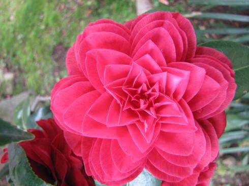 210417・庭の花5