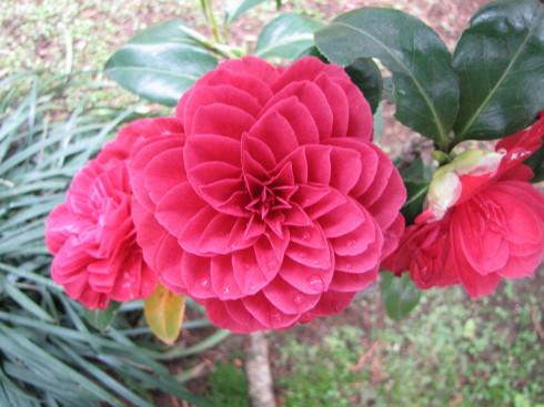 210417・庭の花6