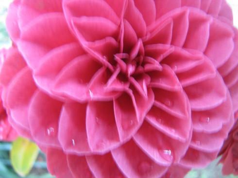 210417・庭の花7