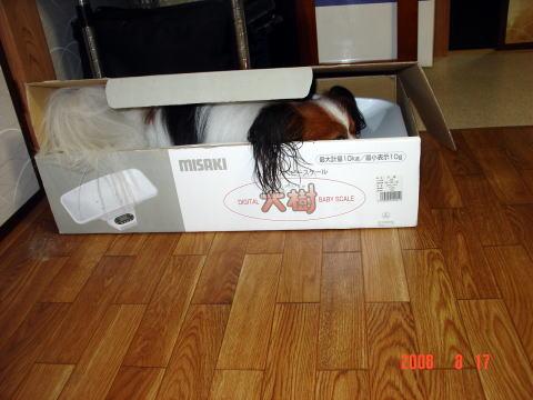 200817・ベビースケール箱のアラン1