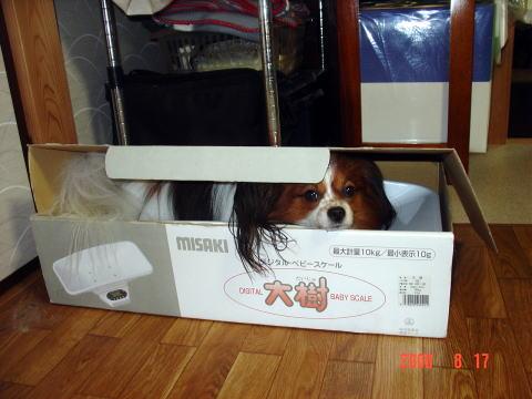 200817・ベビースケール箱のアラン3