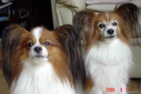 200917・素洗い後の2頭2