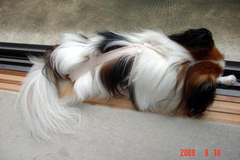 200918・寝るアラン1