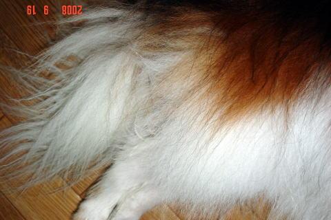 200919・素洗い後のアスピ2