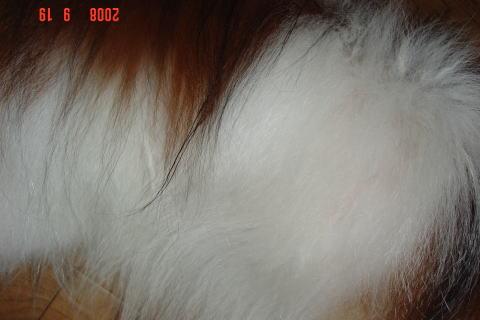 200919・素洗い後のアスピ3