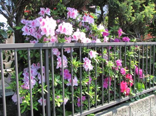 210428・庭の花01