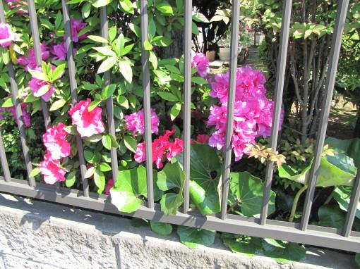 210428・庭の花02