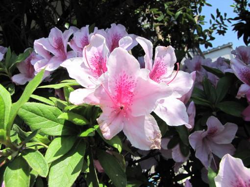 210428・庭の花03