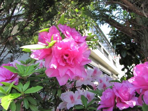 210428・庭の花04