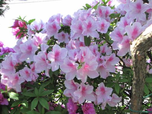210428・庭の花06