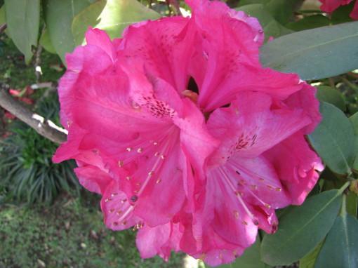 210430・庭の花02