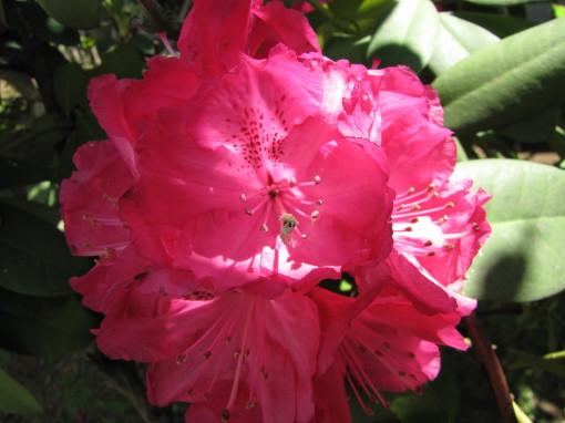 210430・庭の花03