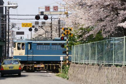 sakura_002.jpg