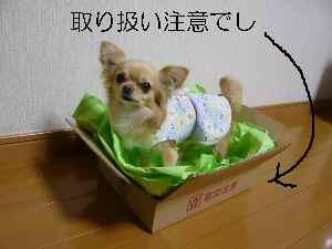 blog20009030601.jpg