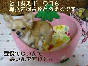 blog2008082301.jpg