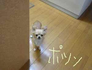 blog2008082603.jpg
