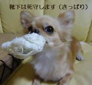 blog2008082708.jpg
