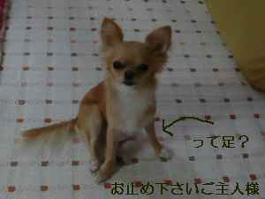 blog20080829.jpg