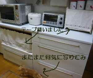 blog20080901.jpg