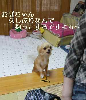 blog2008090301.jpg