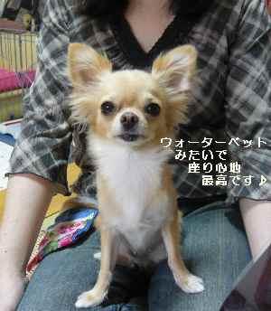 blog2008090302.jpg