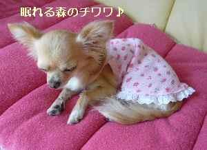 blog2008090901.jpg