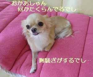 blog2008091101.jpg