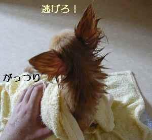 blog2008091102.jpg